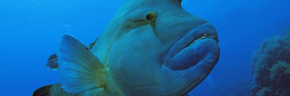 Fisch-Fotos.de